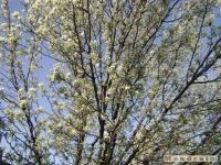 drzewokrzew_340