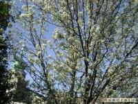 drzewokrzew_341