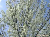 drzewokrzew_346