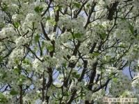 drzewokrzew_349