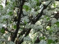 drzewokrzew_350