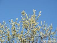 drzewokrzew_363