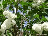 drzewokrzew_384