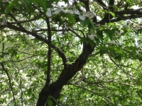 drzewokrzew_386