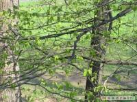 drzewokrzew_401