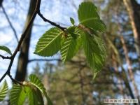 drzewokrzew_404