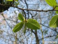 drzewokrzew_406