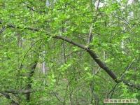 drzewokrzew_407