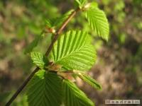 drzewokrzew_409
