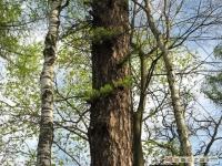 drzewokrzew_410