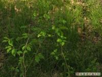 drzewokrzew_411