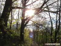 drzewokrzew_413