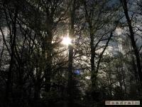 drzewokrzew_423