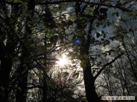 drzewokrzew_424