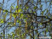 drzewokrzew_431