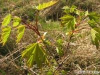 drzewokrzew_433