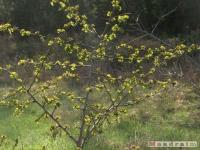 drzewokrzew_435