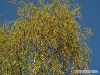 drzewokrzew_441