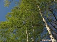 drzewokrzew_445