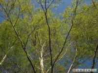 drzewokrzew_446