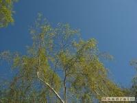 drzewokrzew_447