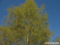 drzewokrzew_449