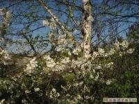 drzewokrzew_455
