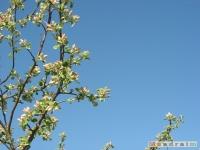 drzewokrzew_459