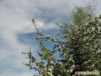 drzewokrzew_461