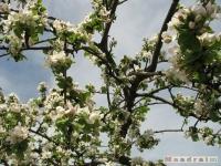 drzewokrzew_465