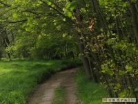 drzewokrzew_472