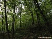 drzewokrzew_474