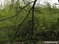 drzewokrzew_477