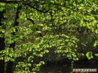 drzewokrzew_480