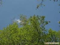 drzewokrzew_484