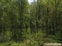 drzewokrzew_485