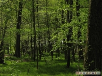 drzewokrzew_489