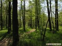 drzewokrzew_490