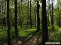 drzewokrzew_491