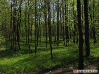 drzewokrzew_492