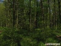 drzewokrzew_496