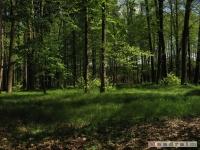 drzewokrzew_499