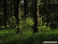 drzewokrzew_500