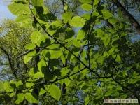 drzewokrzew_501