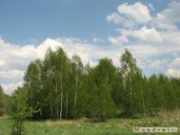 drzewokrzew_504