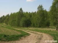 drzewokrzew_505