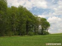 drzewokrzew_508