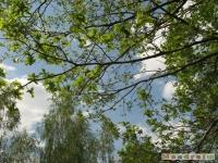 drzewokrzew_511