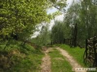 drzewokrzew_512