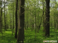 drzewokrzew_515